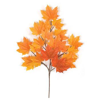 Orange tinted leaves plant