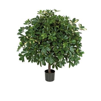 Green bush image