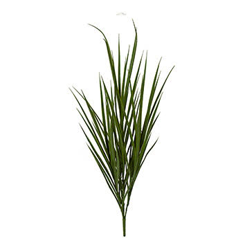 Thin green grass leaves