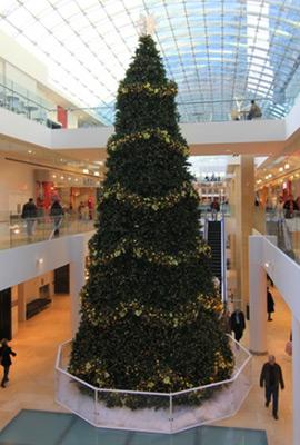 Commercial Frame Tree inside building
