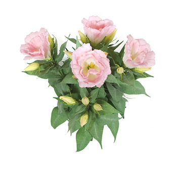 Pink with yellow center flowers image