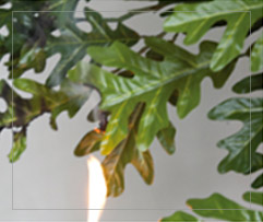 Silk Product 2 photo