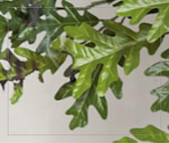 Silk Product 3 photo