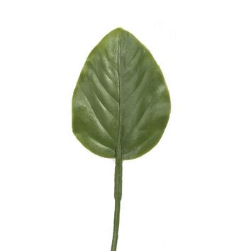 One big dark green leaf photo