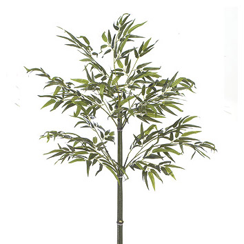 Tall skinny with flat leaves tree image
