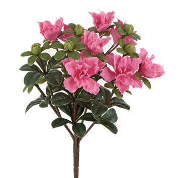 A compact pack of pink flowers with dark green leaves photo