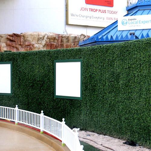 Photo of a foliage wall