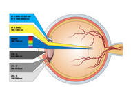 Biological Impacts in Relation Laser Safety