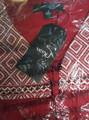 100% Rayon Wine Long Sleeve Open Front Tassel Tie Top (41-25)