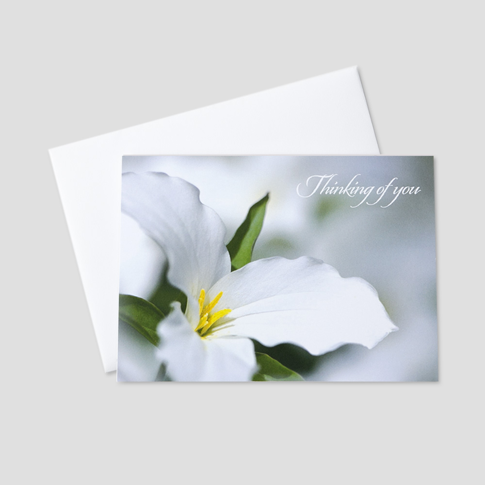 Professional Get Well greeting card with a lily flower on a gray and white background and thinking of you message