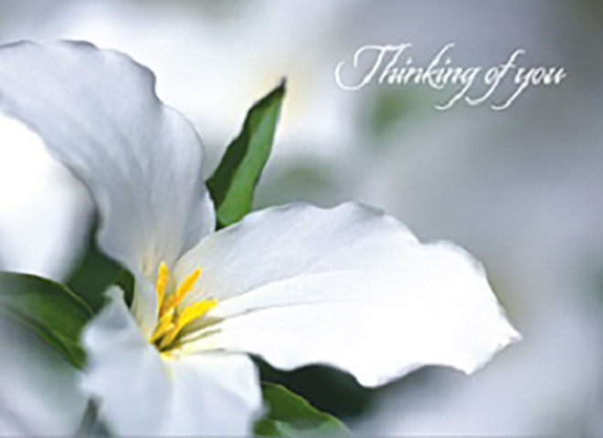 GW1103 - Lily Flower