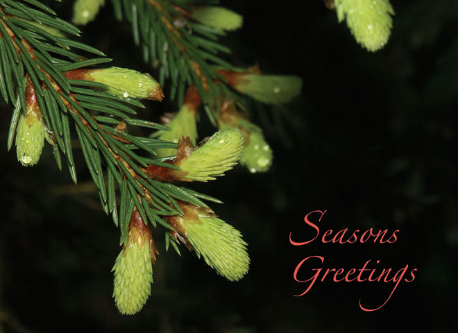 H6028 - Fir Tree Greetings