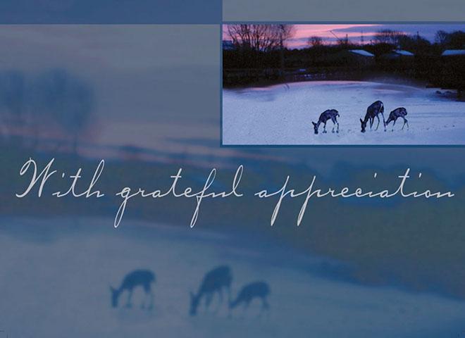 H7055 - Peaceful Deer