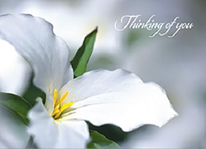S9004 - Lily Flower Sympathy