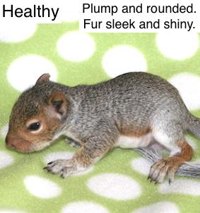Healthy5wk