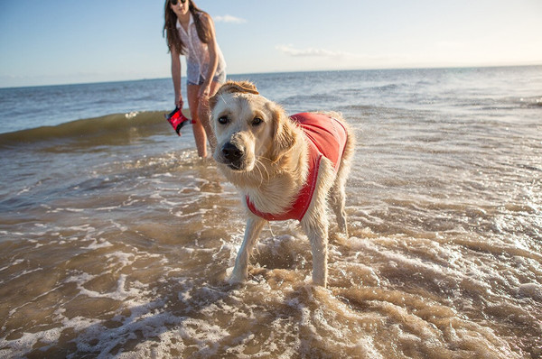 Summer Safety for Dogs