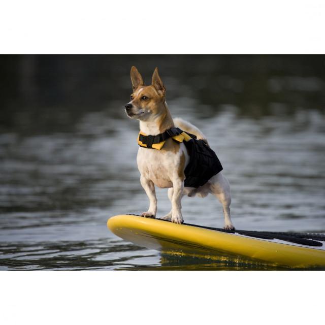Moose goes paddle boarding