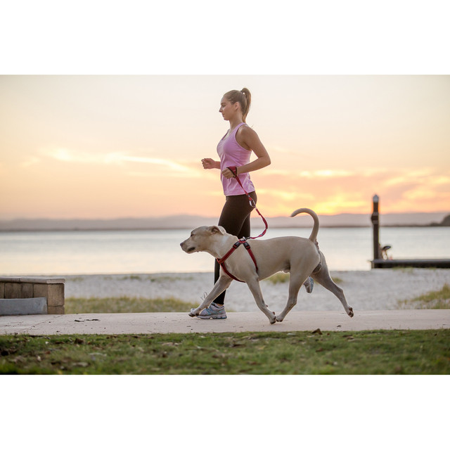 Great for anyone who jogs with their dog