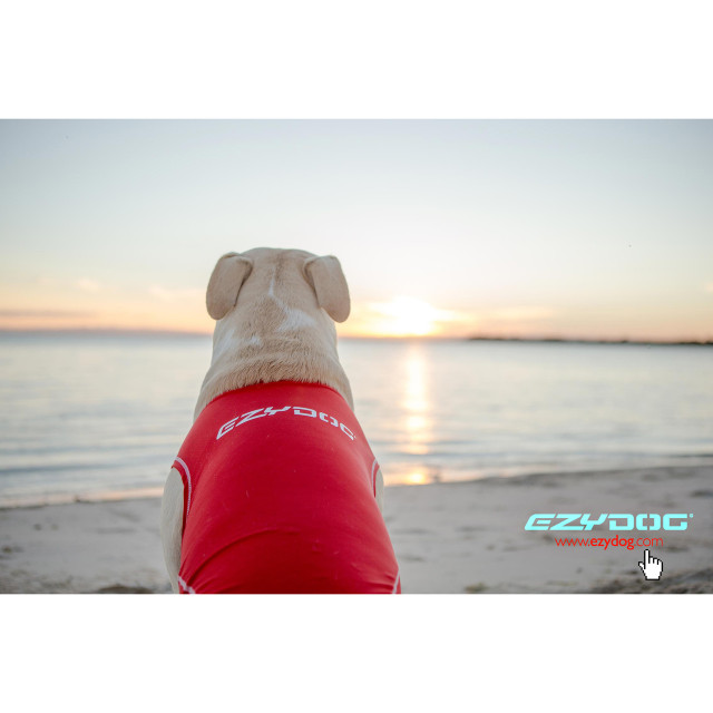 Enjoy the sunset with your dog
