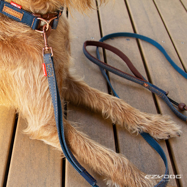 Designer Leash for Small Dogs