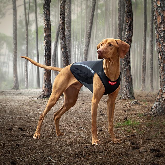Best Dog Jacket for Winter
