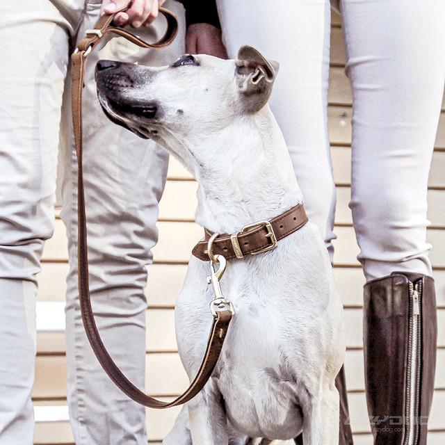 Natural Leather Dog Leads