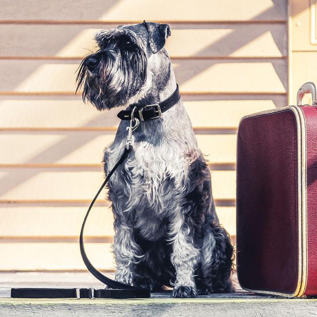 Black Leather Dog Leashes