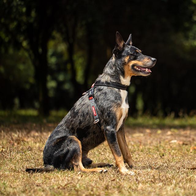 Dog Training Harness