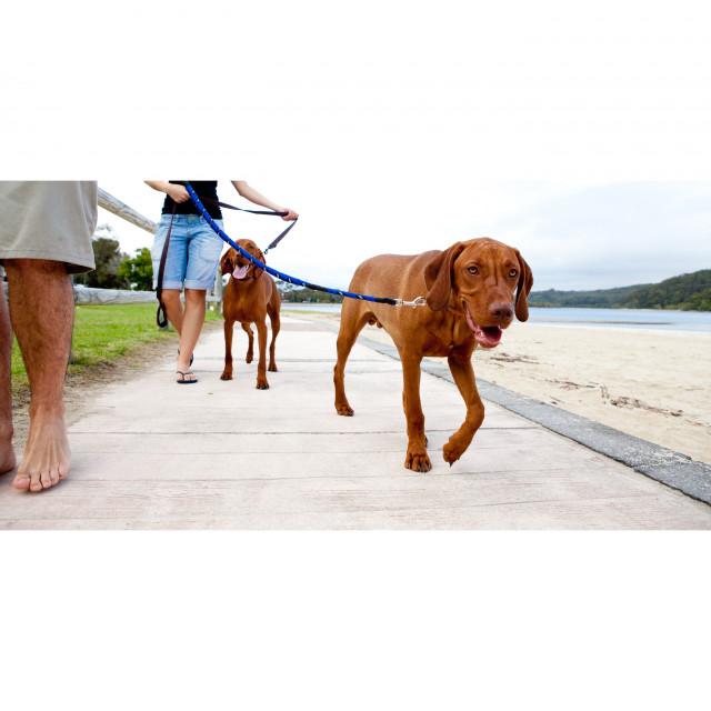 Bo and Turk take a walk on the beach!