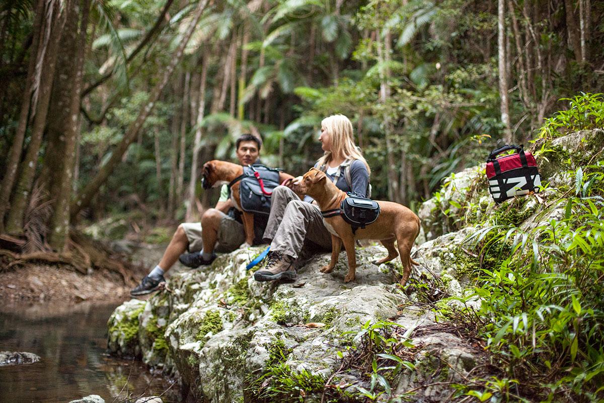 dog-harness-adventures-charlottereeves.jpg