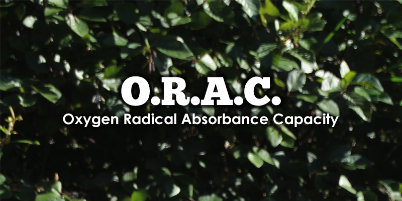 ORAC Values and What Does it Have to do With Acai Berry?
