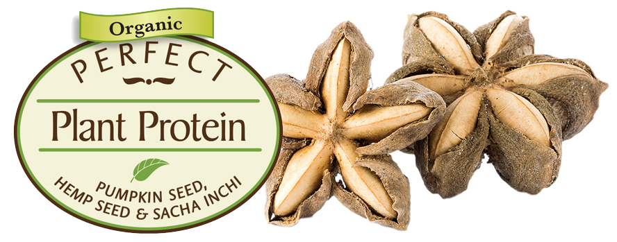 Spotlight on Sacha Inchi Seed: Protein Super-Star