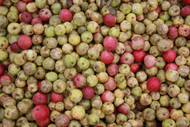 Benefits of Apple Cider Vinegar for Horses