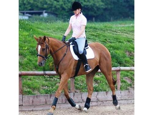 Equi Ami EquiAmi Riding Training Aid