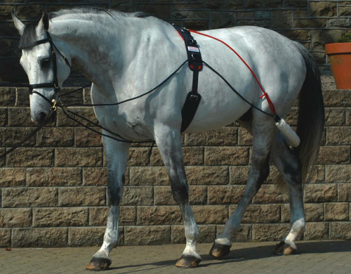 Whitaker International Whitaker Lunging Aid with Roller Training System