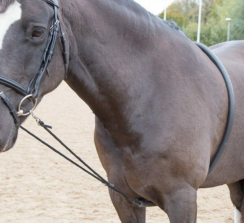 Shires Shires Soft Lunging Aid