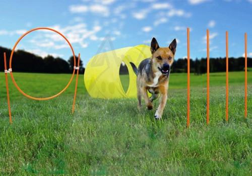 Outward Hound Outdoor Dog Agility Kit