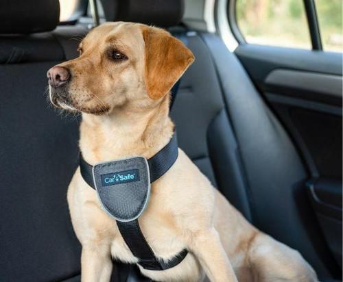 Company of Animals Carsafe Dog Travel Harness - Black