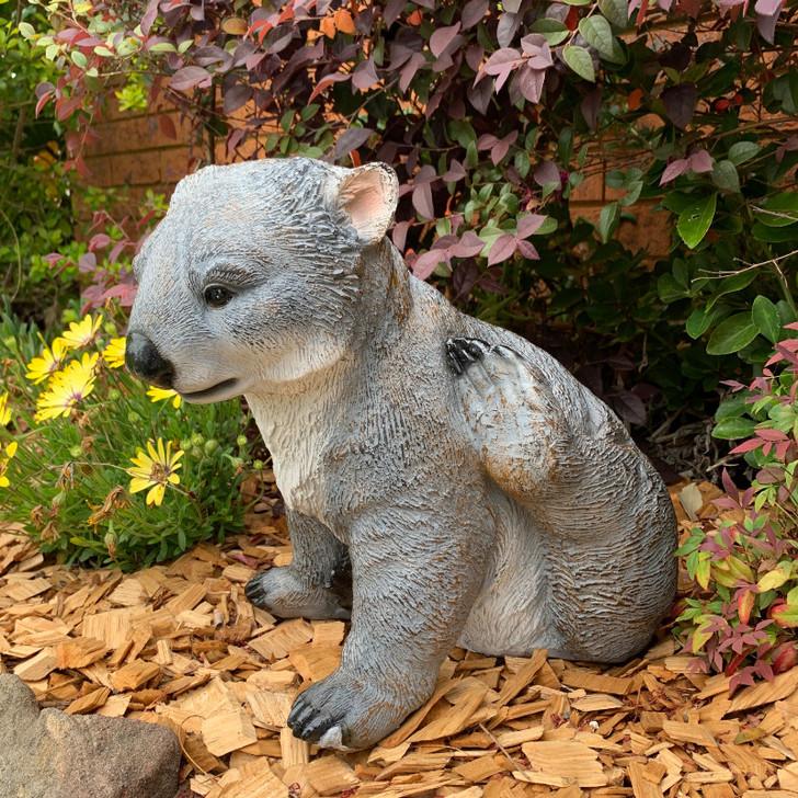 Sitting Wombat