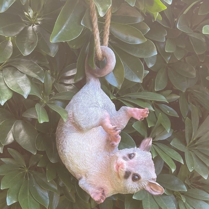 Possum Ringtail On A Rope cm