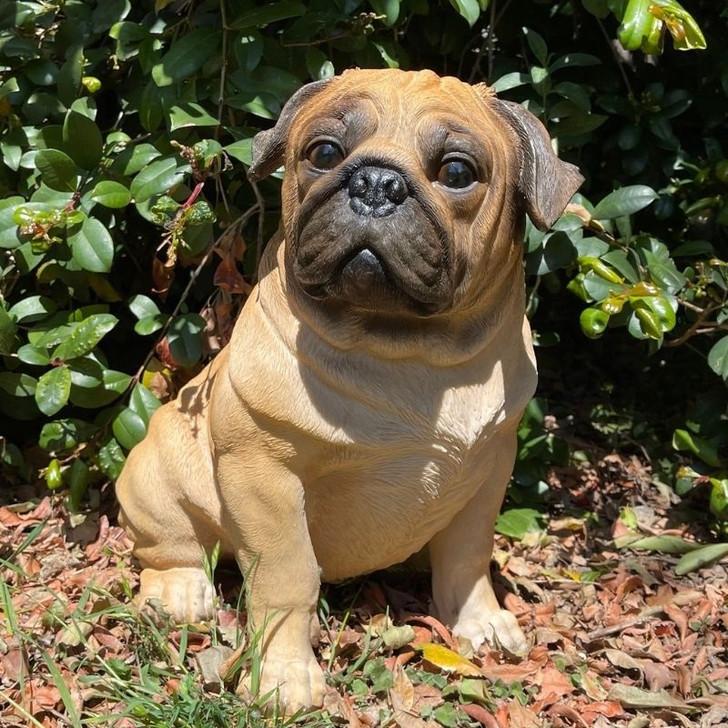 Pug Dog Statue 36cm