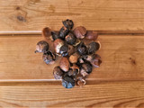 Go Nuts for Soap Nuts