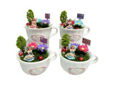 Fairy Garden in Tea Cup - 4 Assorted Designs