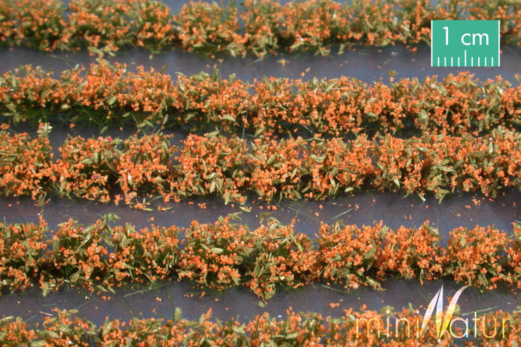 Flower field strips orange