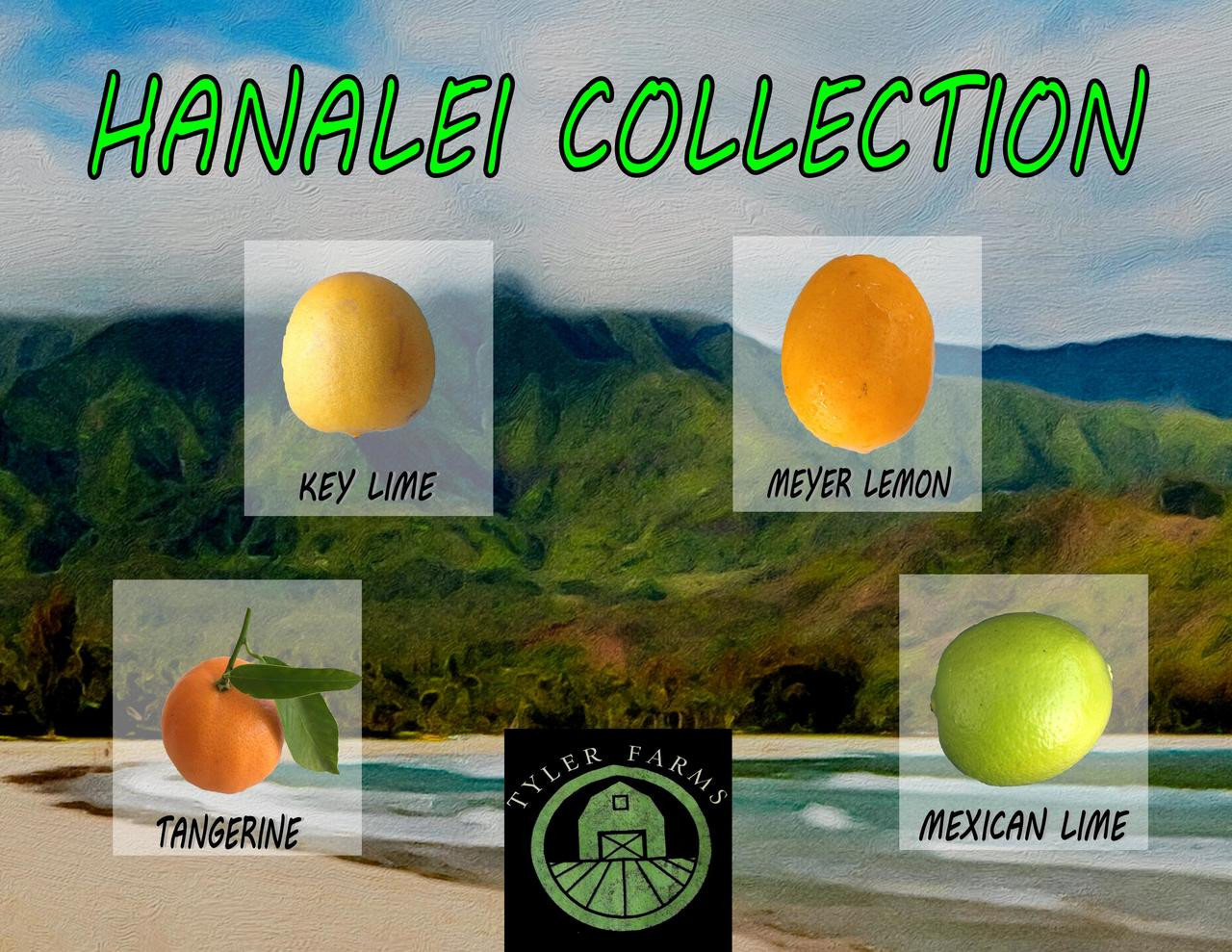 Hanalei Tropical Fruit Seed Collection