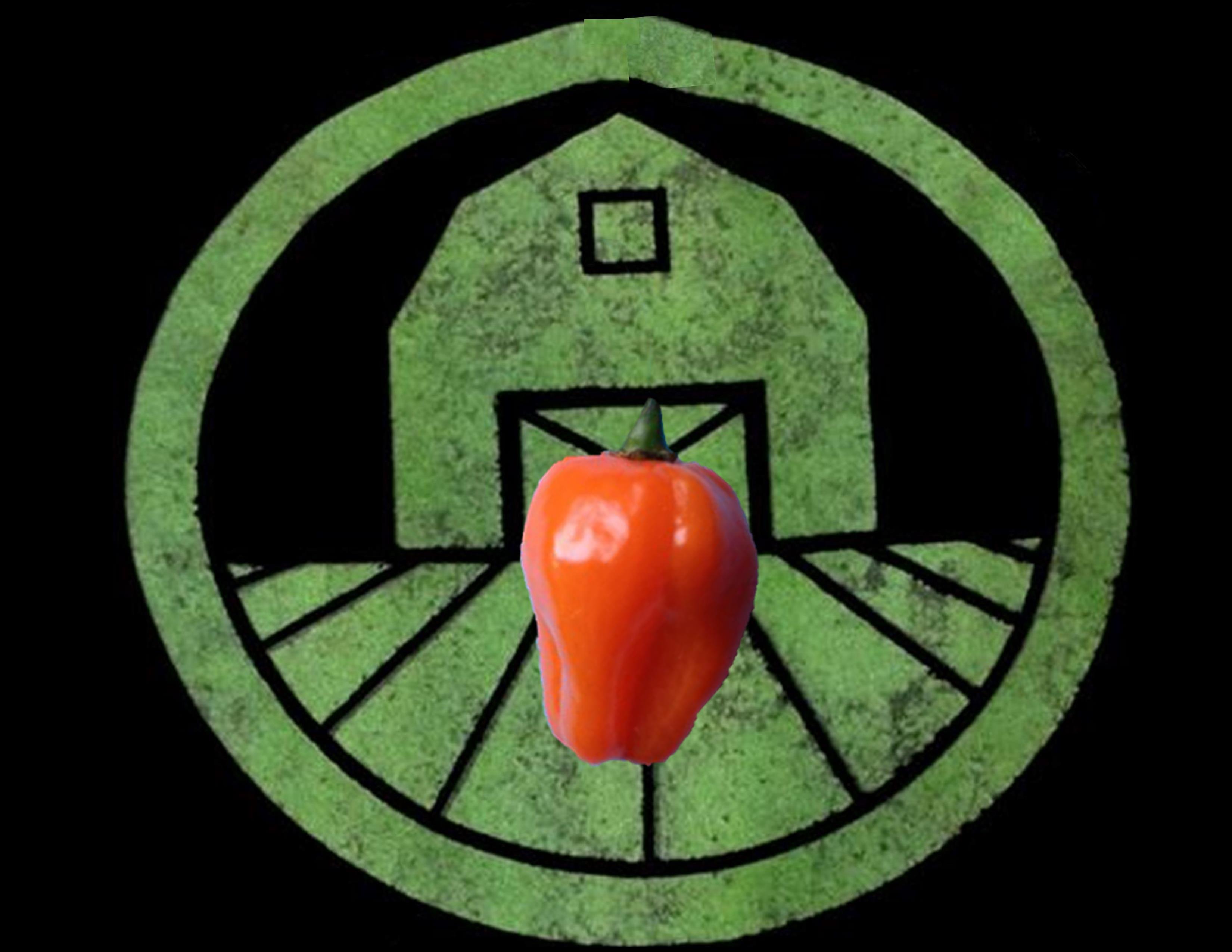 Orange Habanero Pepper | Tyler Farms
