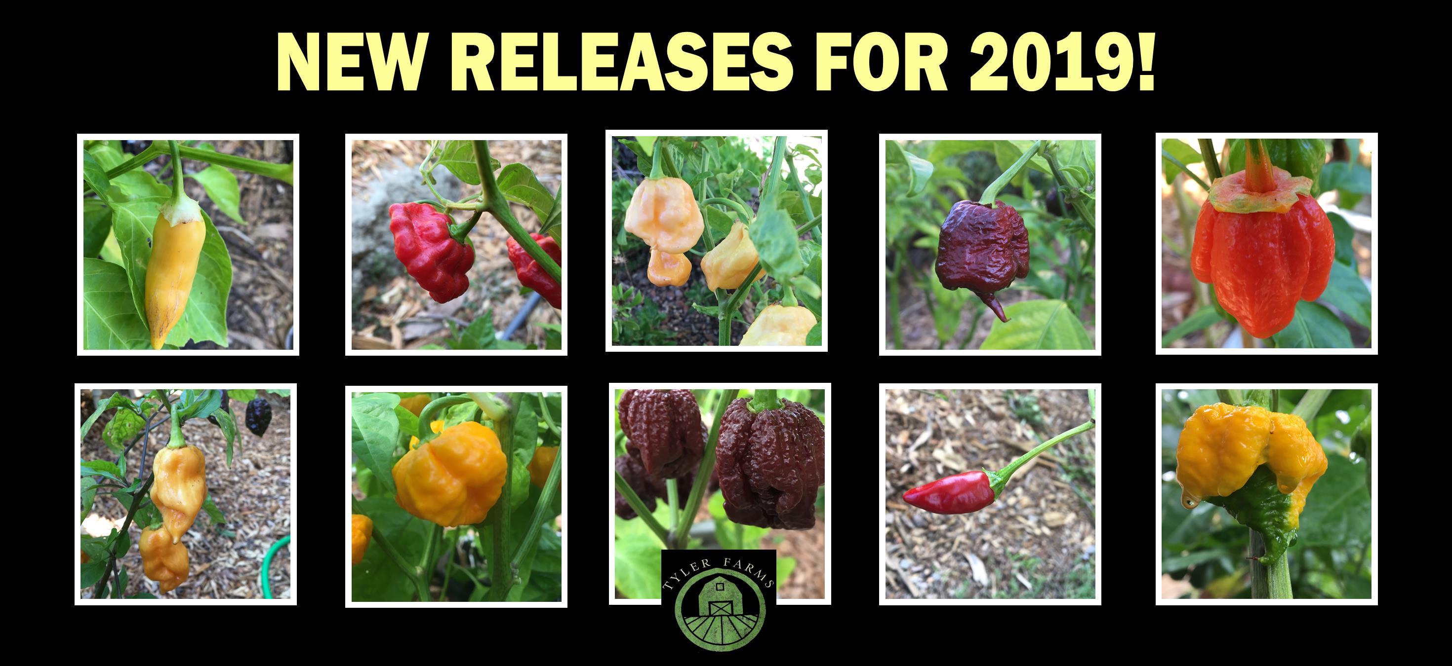 new-releases-for-2019-caro.jpg