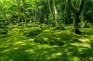 Information On How To Maintain A Beautiful Moss Garden