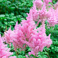 Perennials That Bloom First In Spring