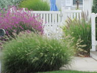 How to Grow Grasses Successfully